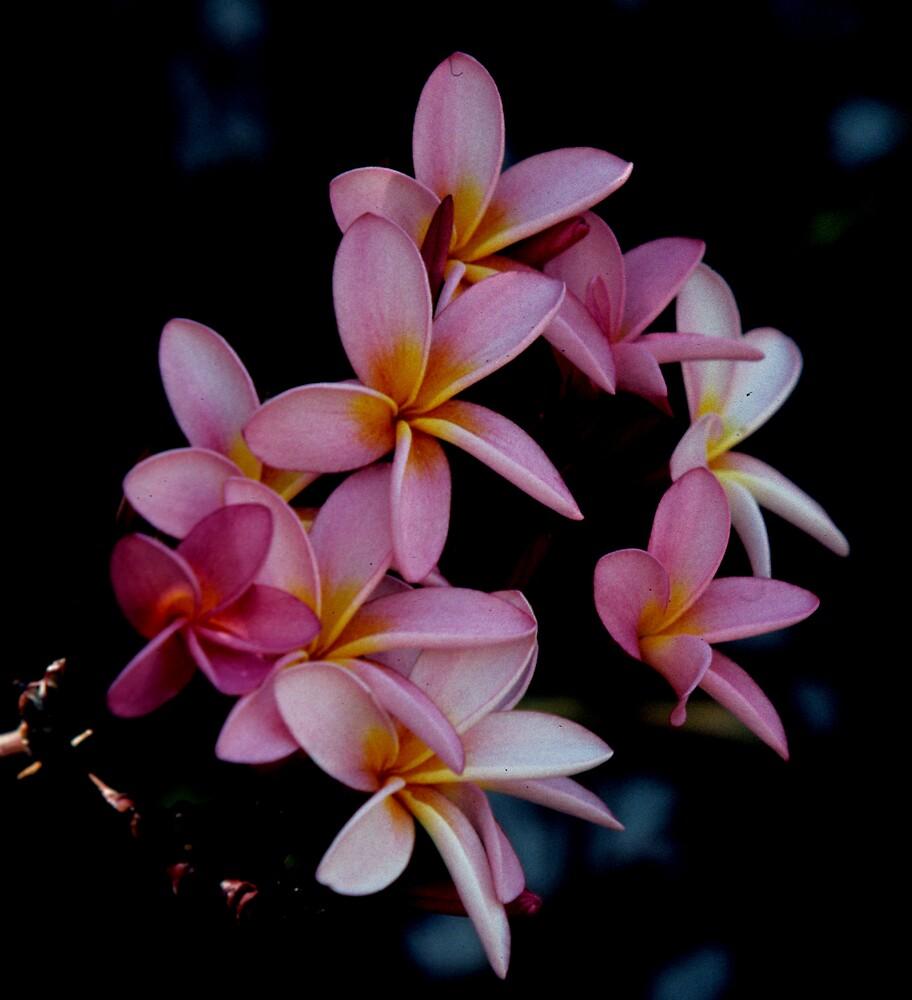 Flower Power (3) by bertspix
