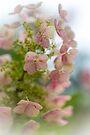 Meet The Beautiful Oak Leaf Hydrangea by MotherNature