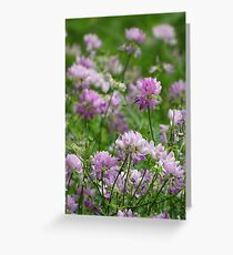 Crown Vetch at its peak Greeting Card