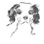 Cavalier King Charles Spaniel Puppy Drawing by Douglas Rickard