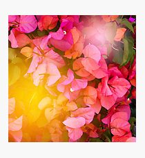 Bright summer background with flowers Photographic Print