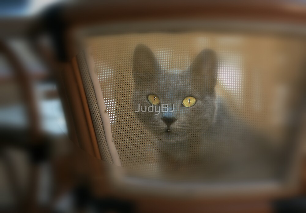CafeCat by JudyBJ