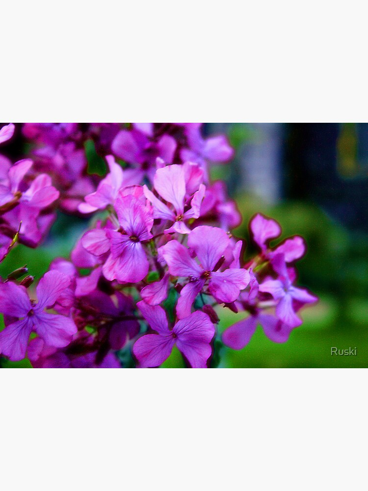 Flowers Outside St Giles IV by Ruski