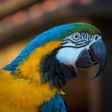 Harley the Macaw by sgrace