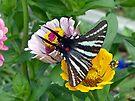 Zebra Swallowtail Butterfly by FrankieCat