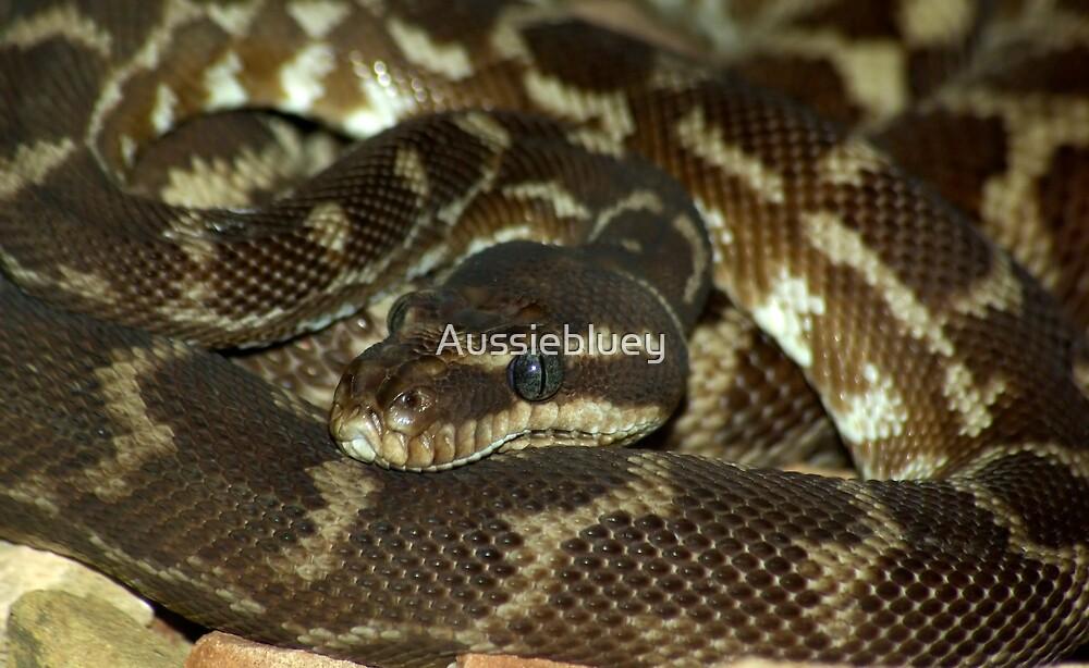 Python by Aussiebluey