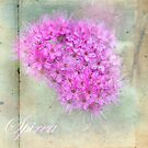 Pink Spirea by MotherNature2