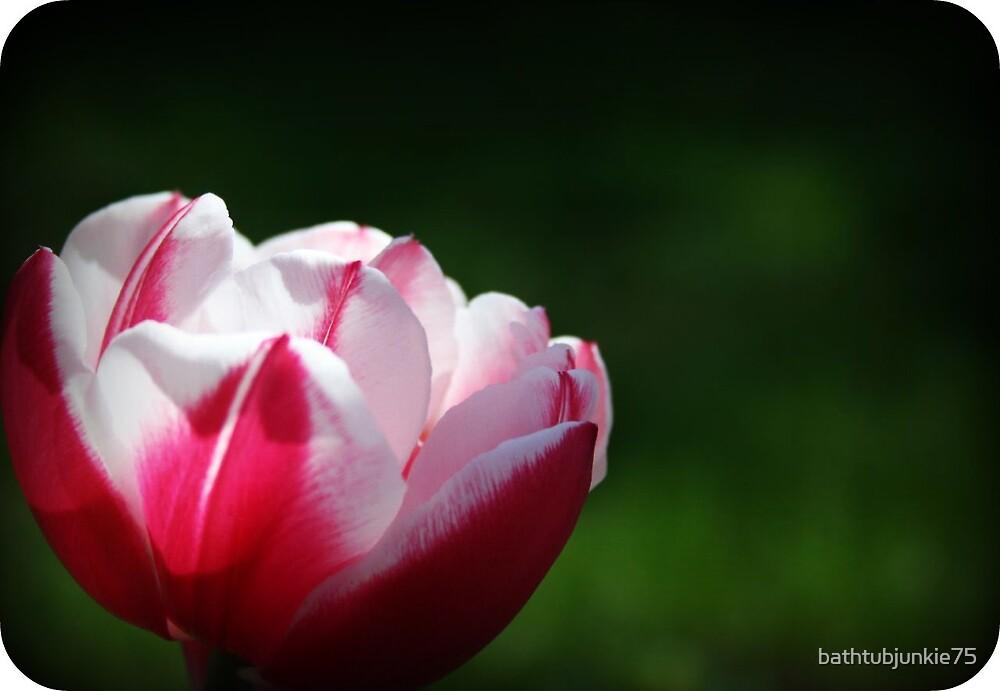 [lone tulip] by bathtubjunkie75