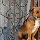 How much is that doggy in the window ? by Arie Koene