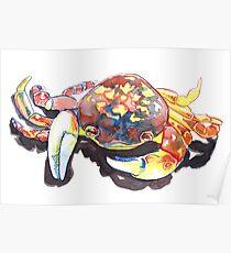 Ink Drawing of Sea Crab  Poster