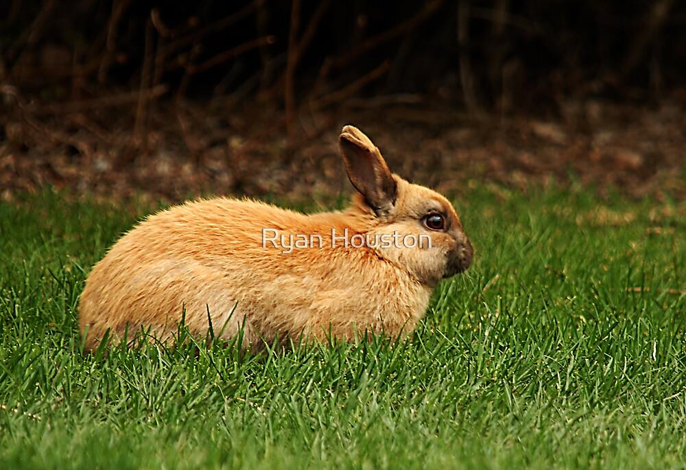 Bunny Gone Wild by Ryan Houston