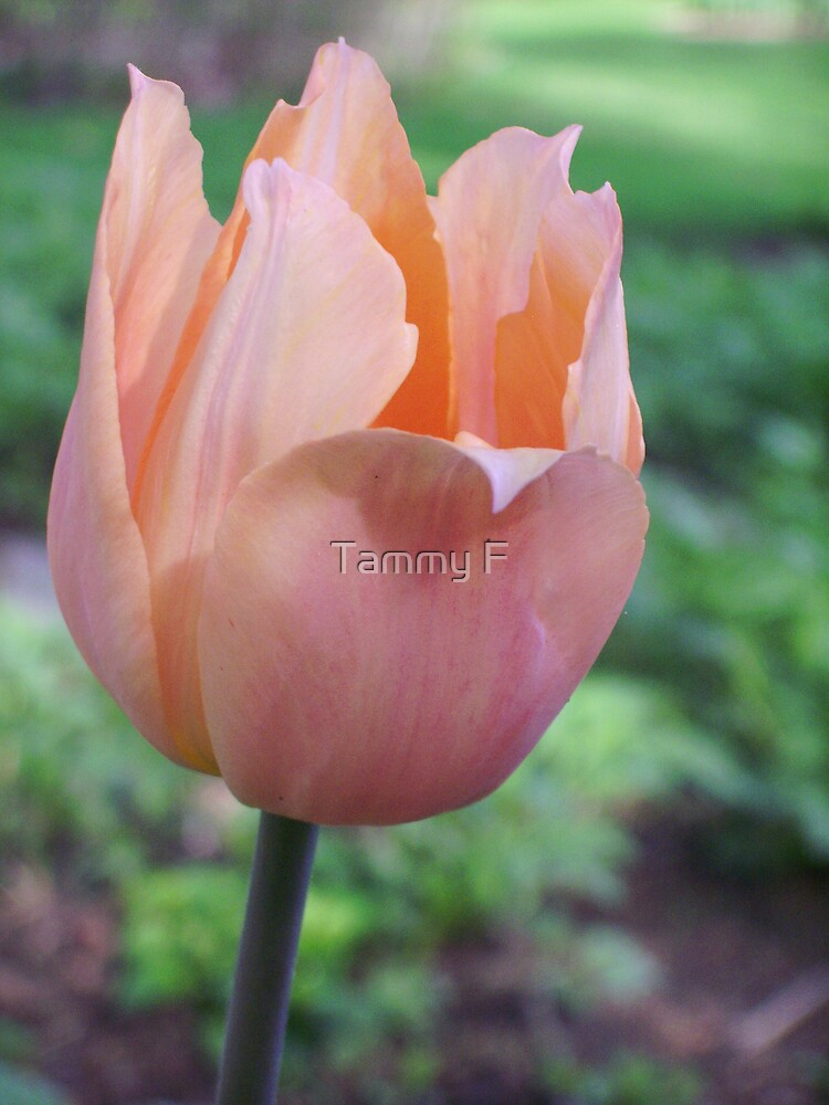 Wavy Petals by Tammy F