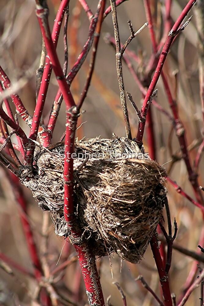 Empty Nest by Stephen Thomas