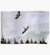 Blue Herons in Flight Poster