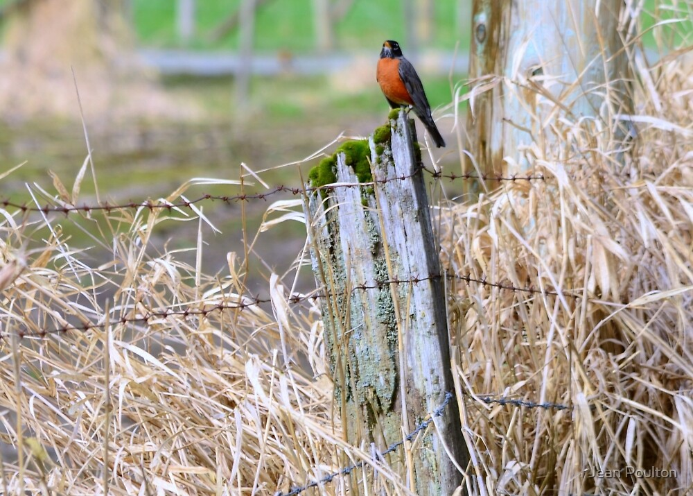 Waiting for spring by Jean Poulton