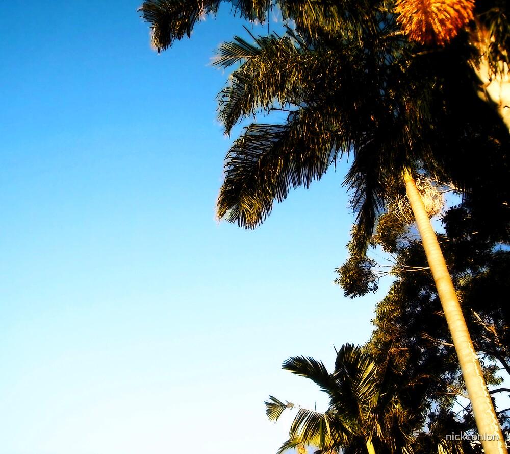 palm tree by nickconlon