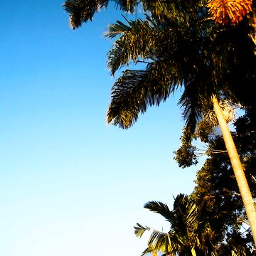 palm tree by nickconlon