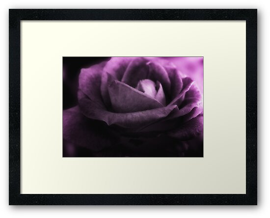 Purple Rose by Doreen Erhardt