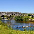 Dartmoor by Lisa Williams