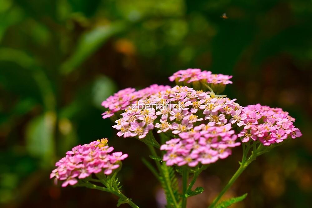 Tiny Flowers by zbendrick