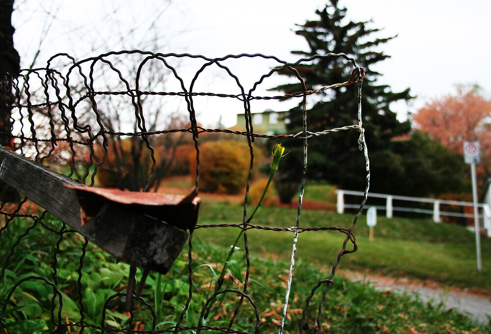 Rusted wire fence by gemleslie