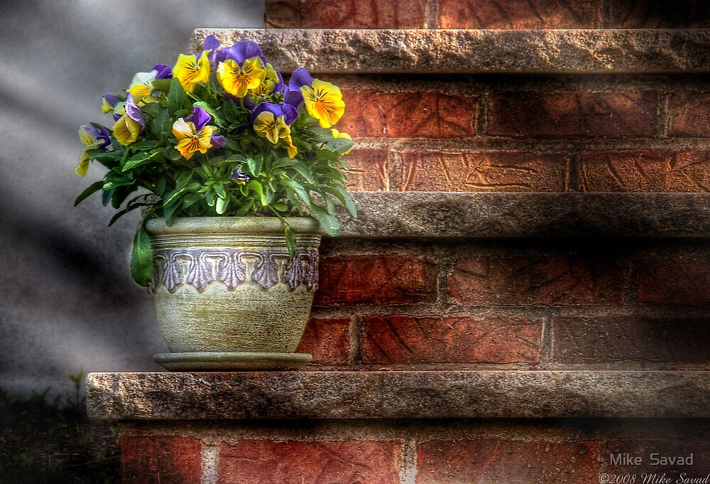 Pansies by Mike  Savad