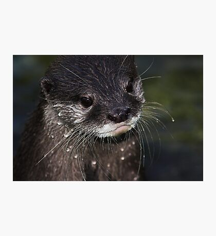 Wet Whiskers Photographic Print