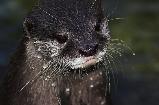 Wet Whiskers by Robyn Carter