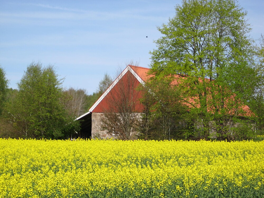 Rapeseed by helenahlg