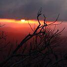 Firey sunset by Robyn Lakeman