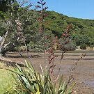 Pohutukawa and Flowering Flax at Shoal Bay......!! by Roy  Massicks