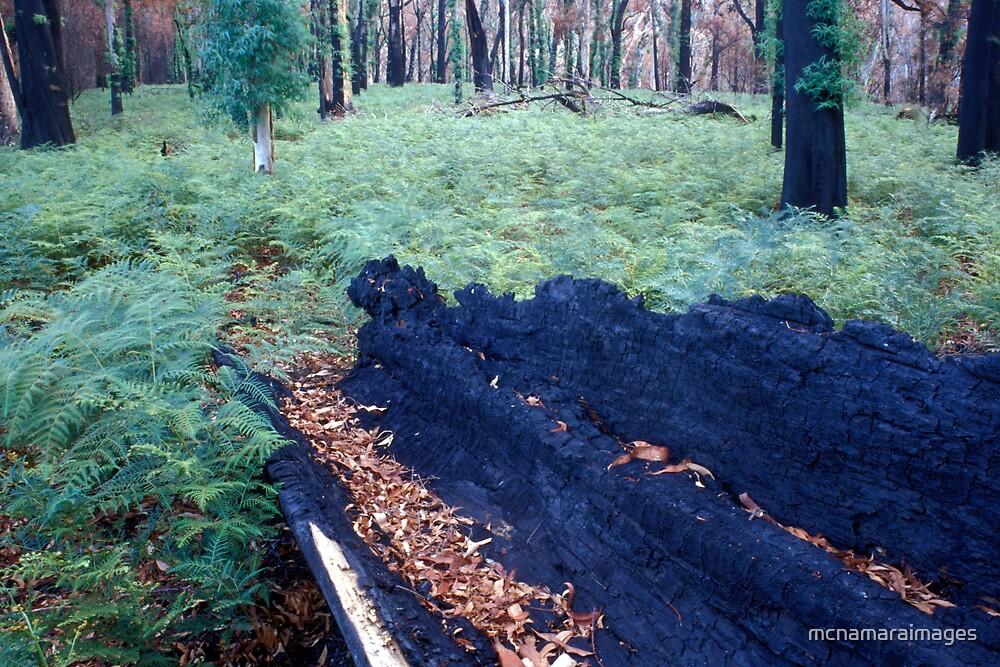 Burnt out log by mcnamaraimages