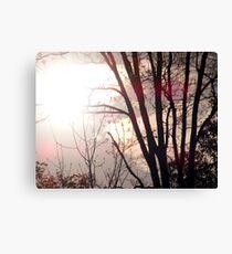 sunspots Canvas Print