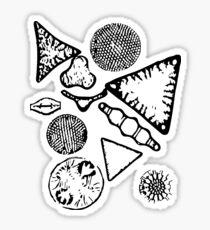 Diatoms Forever Sticker