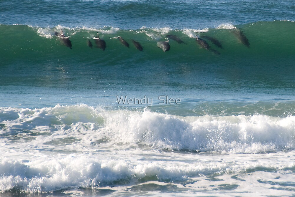 Surfin' Cetaceans by Wendy  Slee