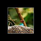 Splish Splash Trio by Richard G Witham