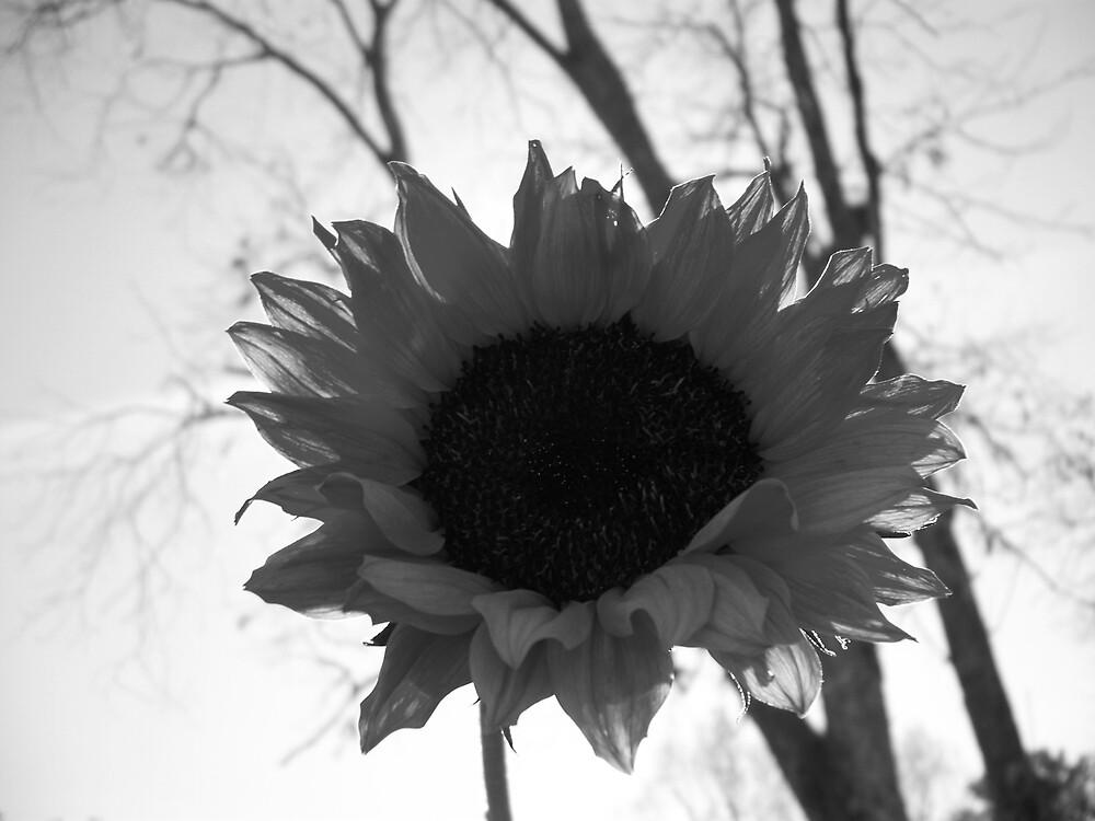 B&W Sunflower by TheShanz