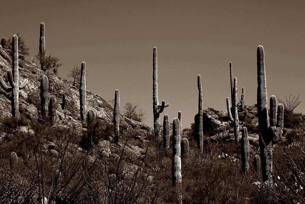 desert scape by seandraper