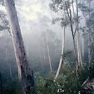 Gums In Mist Katoomba by Brett Thompson