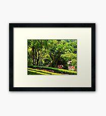 Lush Green Foliage Framed Print