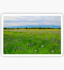 Wild Iris Sticker