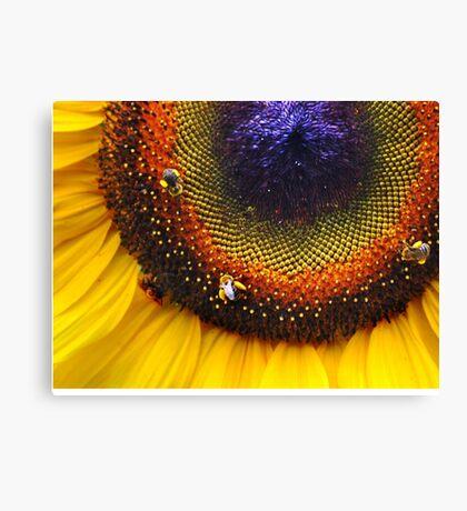 Sunflower, Seeds & Bees Canvas Print