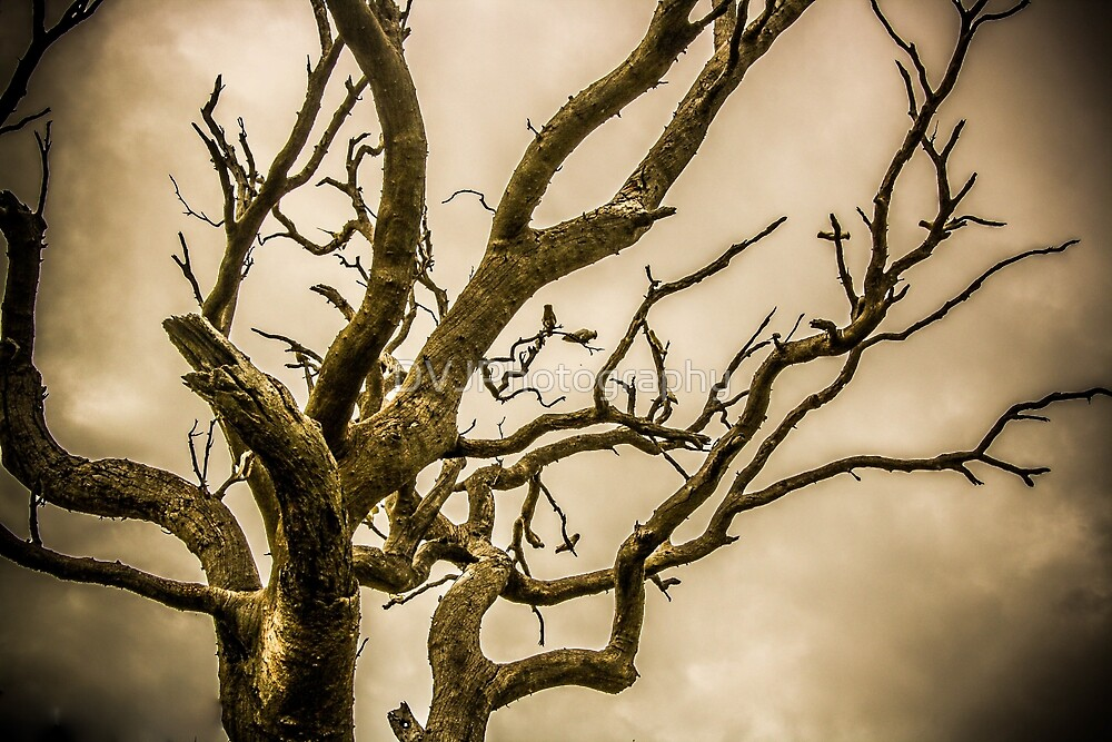 Ethereal Tree by DVJPhotography