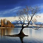 Wanaka Lake Tree 2 by Charles Kosina
