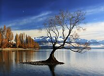 Wanaka Lake Tree 2 by Charles Kosina