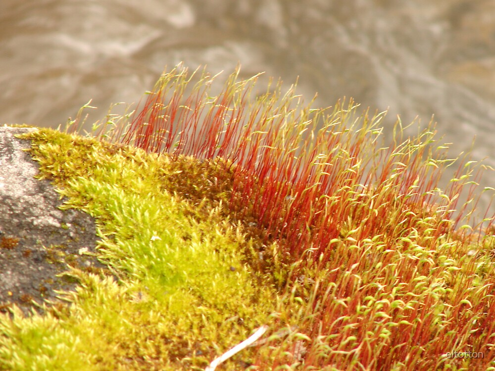 Spring Moss by eltotton