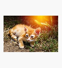 Little cute red kitten with big eyes Photographic Print