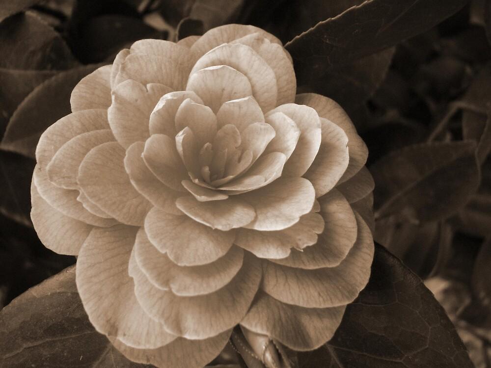 flower  by jessinoble