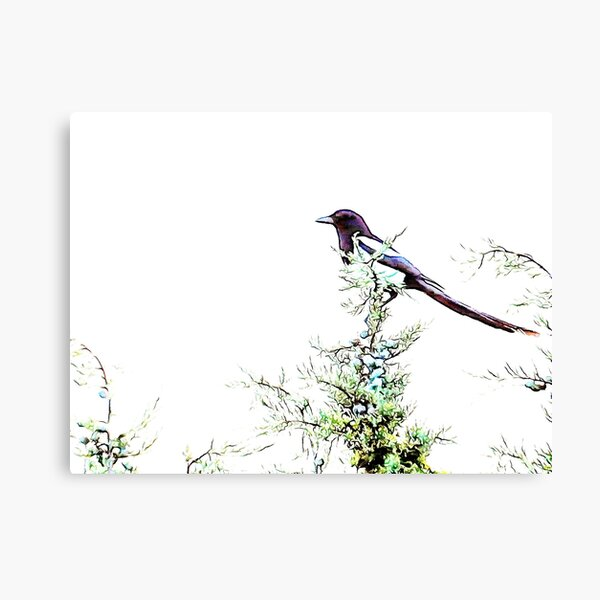 In Search of Summer Pickings Canvas Print