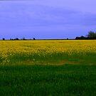 Golden Horizon by Niamh Harmon